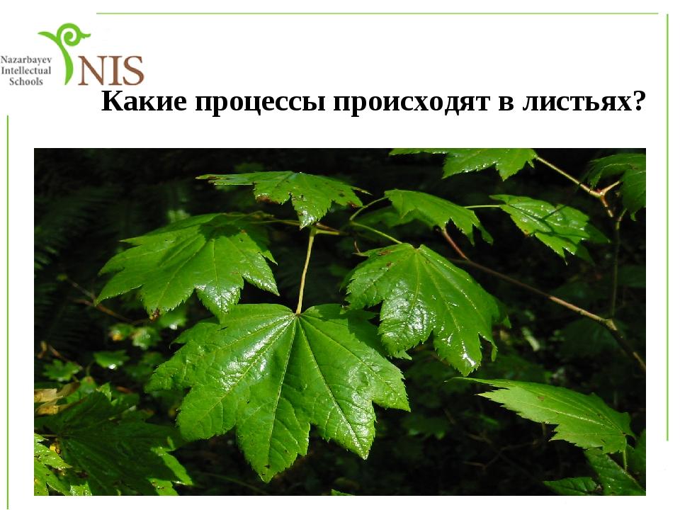 Какие процессы происходят в листьях?