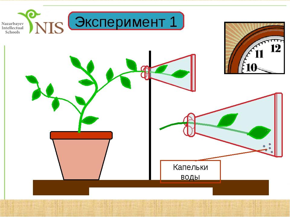Эксперимент 1
