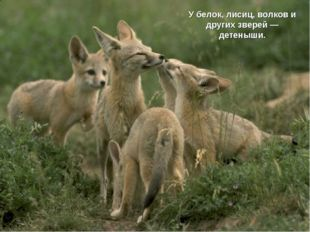 У белок, лисиц, волков и других зверей — детеныши.
