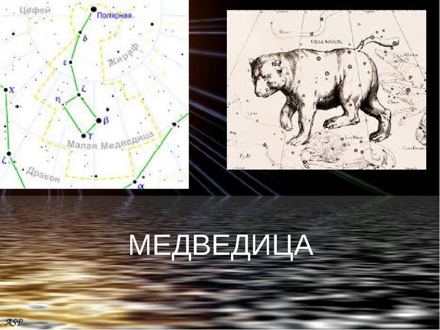 ASP МЕДВЕДИЦА