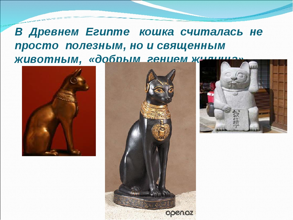 Почему в древнем египте кошка священное животное