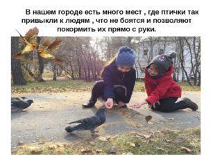 В нашем городе есть много мест , где птички так привыкли к людям , что не бо