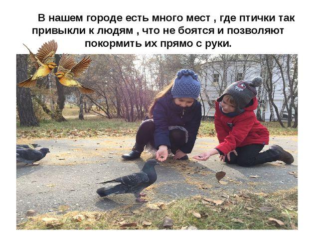В нашем городе есть много мест , где птички так привыкли к людям , что не бо...