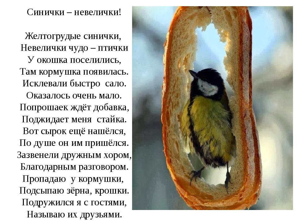 Синички – невелички! Желтогрудые синички, Невелички чудо – птички У окошка п...