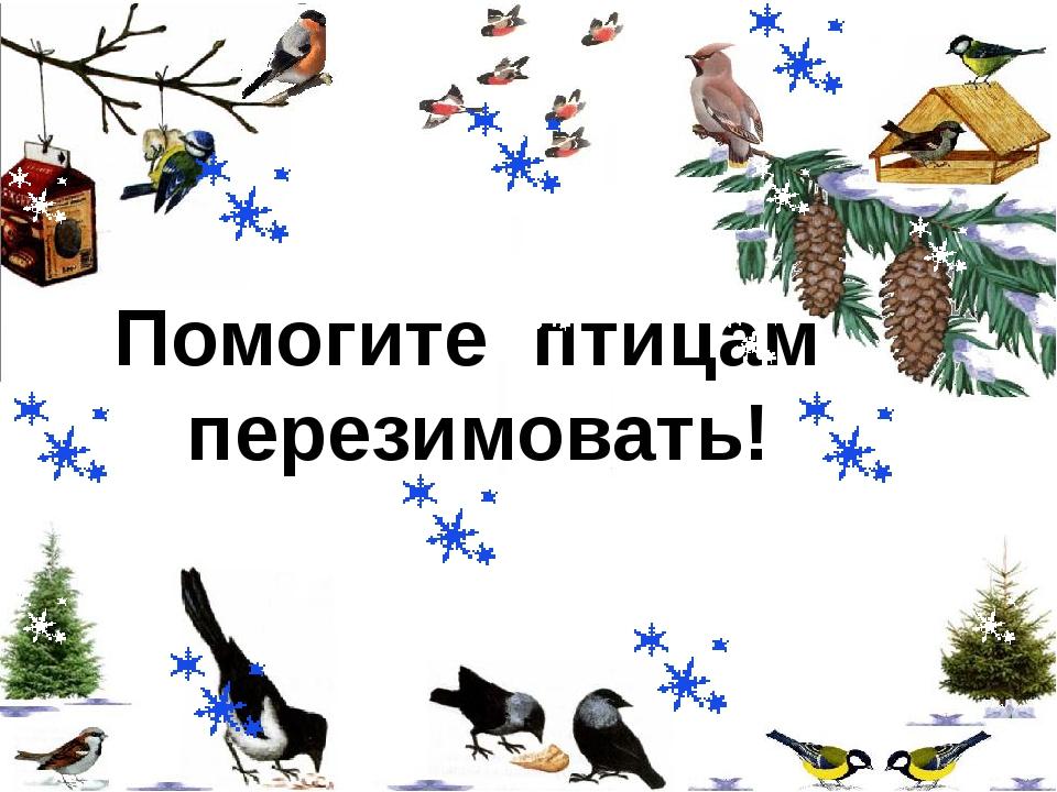 Помогите птицам перезимовать!