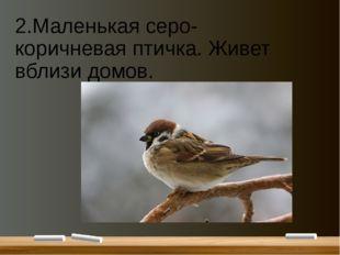 2.Маленькая серо-коричневая птичка. Живет вблизи домов.