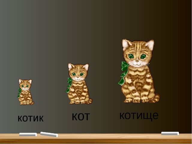 кот котик котище