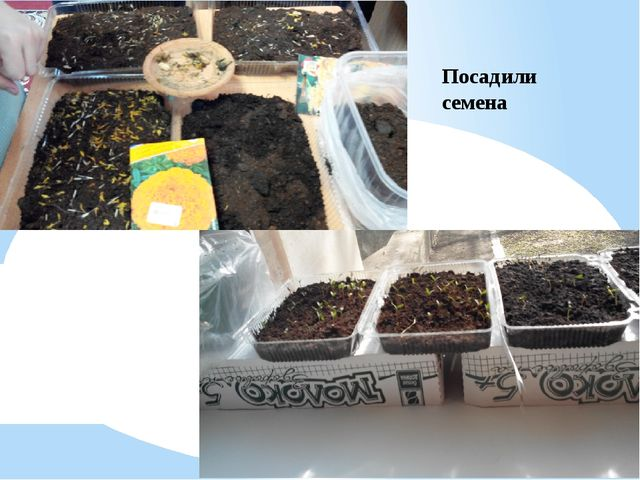 Посадили семена