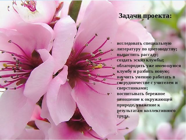 исследовать специальную литературу по цветоводству; вырастить рассаду; созда...