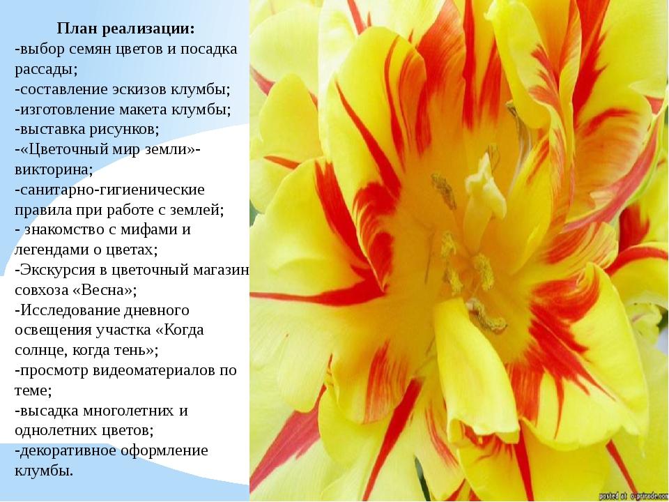 План реализации: -выбор семян цветов и посадка рассады; -составление эскизов...
