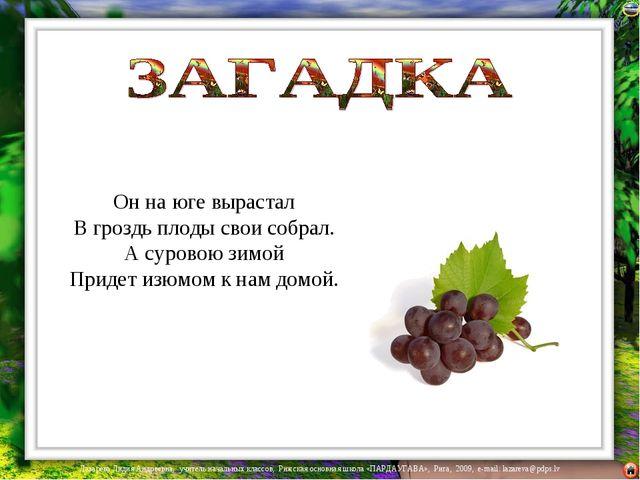 Он на юге вырастал В гроздь плоды свои собрал. А суровою зимой Придет изюмом...