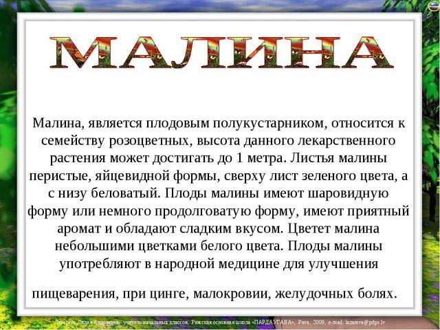 Малина, является плодовым полукустарником, относится к семейству розоцветных,...