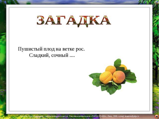 Пушистый плод на ветке рос. Сладкий, сочный .... Лазарева Лидия Андреевна, уч...