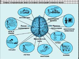 Сферы специализации левого и правого полушарий головного мозга