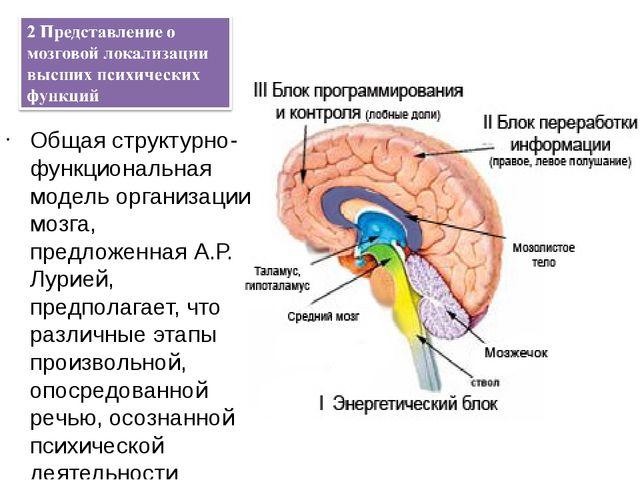 дставление о мозговой локализации высших психических функций Общая структурн...