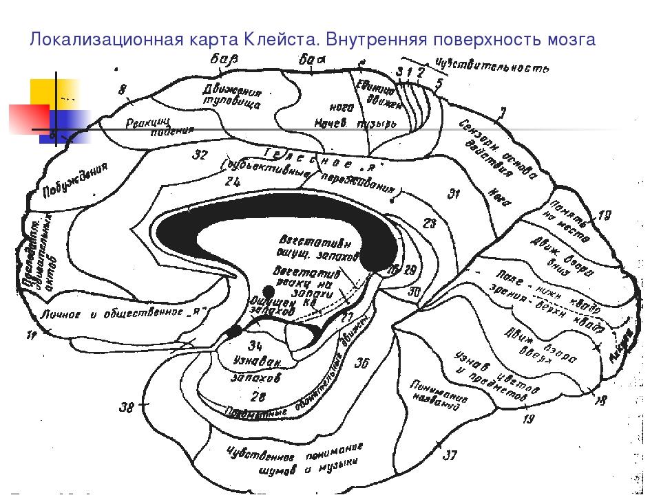 Локализационная карта Клейста. Внутренняя поверхность мозга