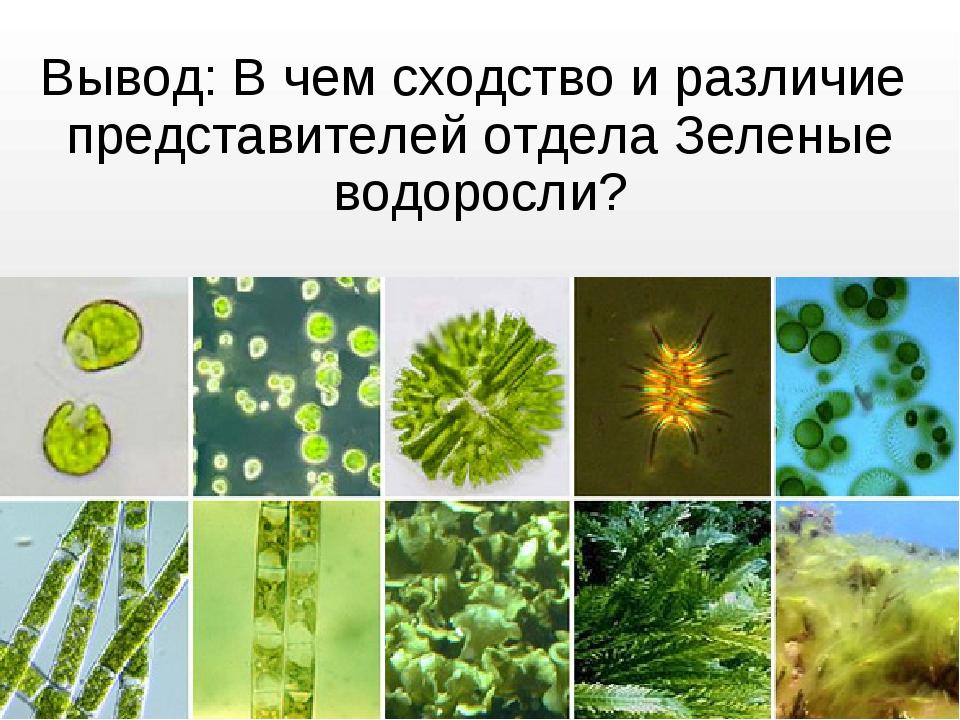 500 презентация на тему общая характеристика водорослей - скачать презентации по биологии cлайд 12