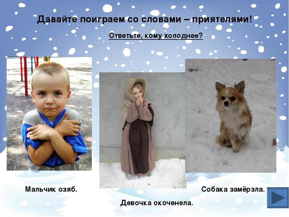 Собака Пёс Лошадь Конь Выставка