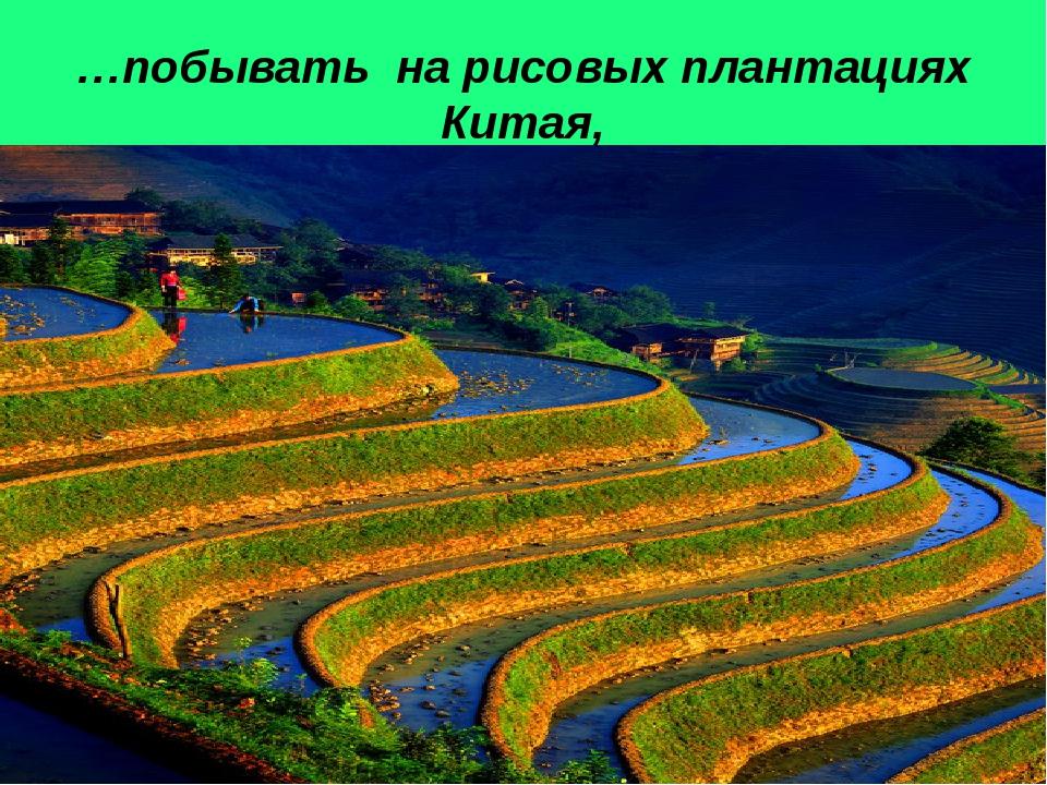 …побывать на рисовых плантациях Китая,