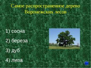 Самое распространенное дерево Воронежских лесов 1) сосна 2) береза 3) дуб 4)