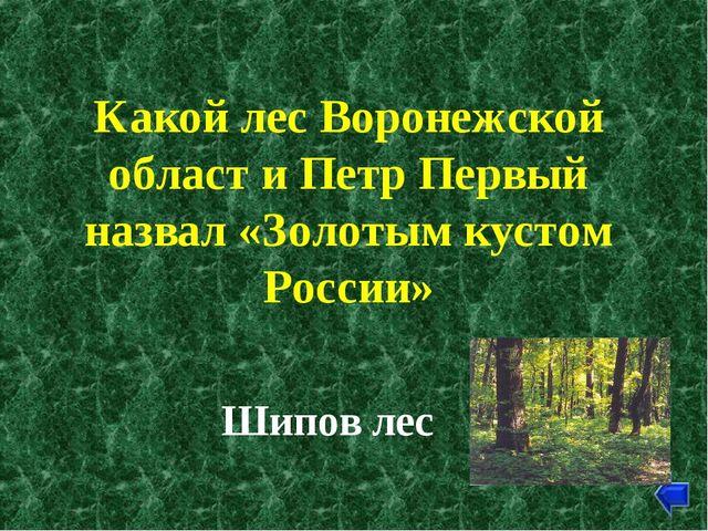 Какой лес Воронежской област и Петр Первый назвал «Золотым кустом России» Шип...