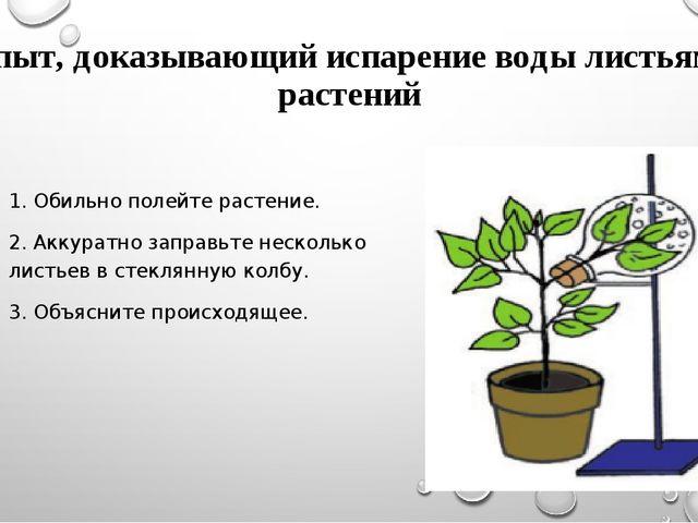 Опыт, доказывающий испарение воды листьями растений 1. Обильно полейте растен...