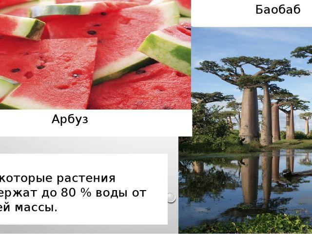 Некоторые растения содержат до 80 % воды от своей массы. Арбуз Баобаб