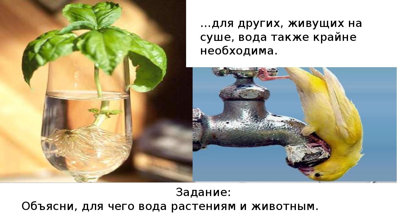 …для других, живущих на суше, вода также крайне необходима. Задание: Объясни...