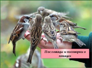 Пословицы и поговорки о птицах