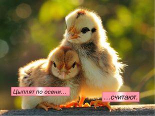 Цыплят по осени… …считают.