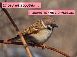 Слово не воробей… …вылетит- не поймаешь.