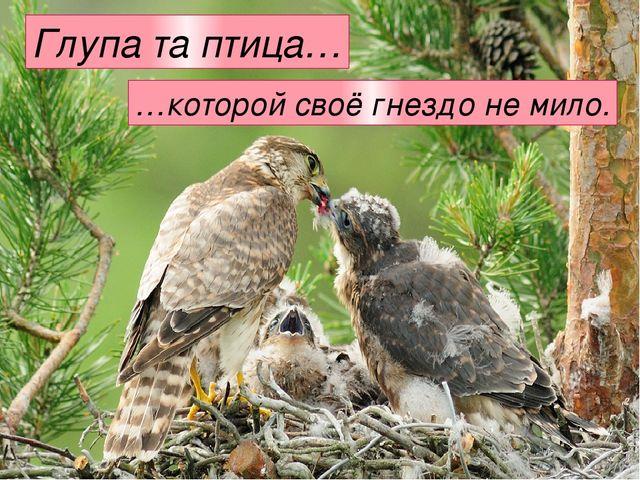Глупа та птица… …которой своё гнездо не мило.