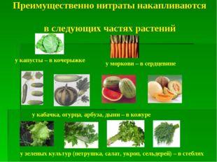 Преимущественно нитраты накапливаются в следующих частях растений у капусты –