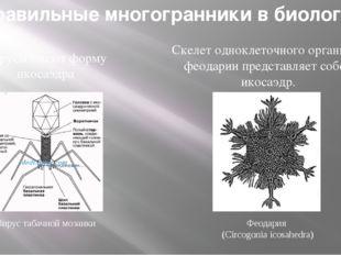 Вирус табачной мозаики Феодария (Circogonia icosahedra) Правильные многогранн