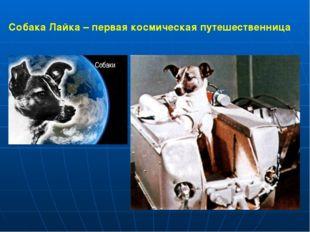 Собака Лайка – первая космическая путешественница