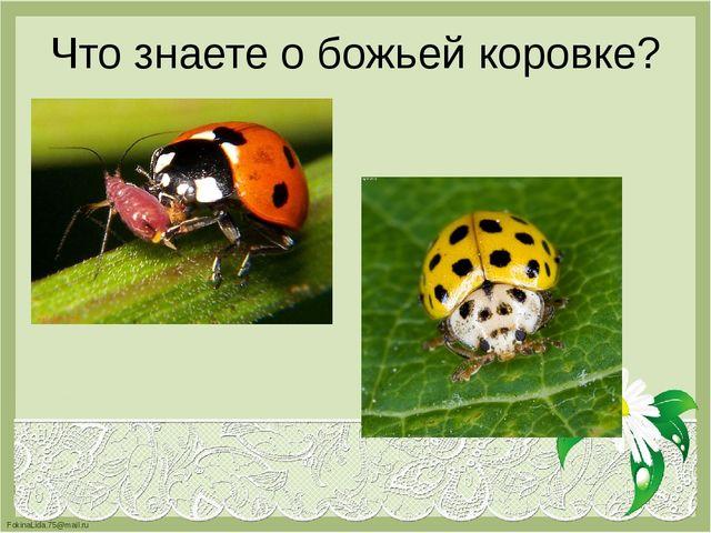 Что знаете о божьей коровке? FokinaLida.75@mail.ru