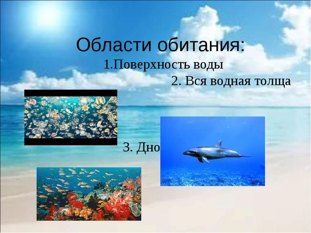 Области обитания: 1.Поверхность воды 2. Вся водная толща 3. Дно океана