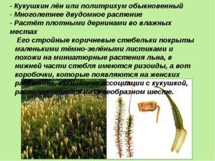 - Кукушкин лён или политрихум обыкновенный - Многолетнее двудомное растение -