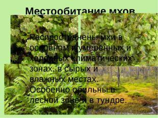 Местообитание мхов. Распространены мхи в основном в умеренных и холодных клим
