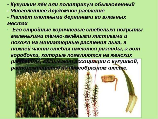 - Кукушкин лён или политрихум обыкновенный - Многолетнее двудомное растение -...
