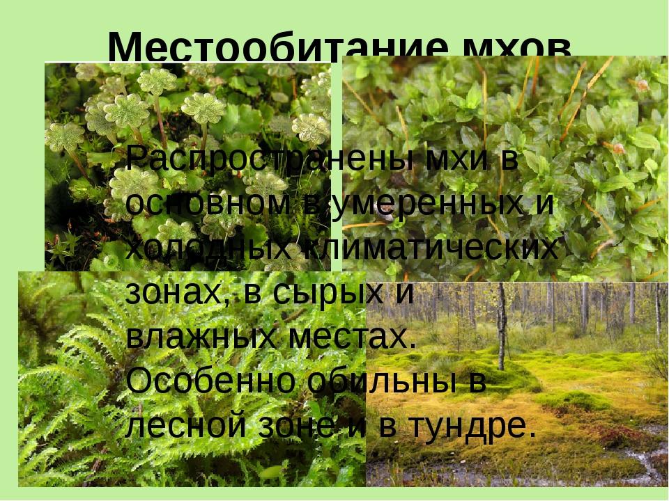 Местообитание мхов. Распространены мхи в основном в умеренных и холодных клим...