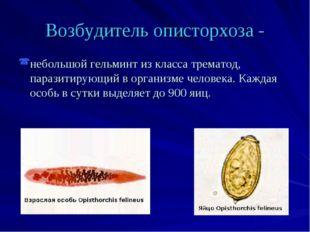 Возбудитель описторхоза - небольшой гельминт из класса трематод, паразитирующ