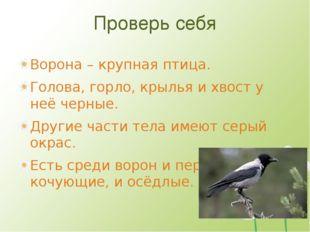 Проверь себя Ворона – крупная птица. Голова, горло, крылья и хвост у неё черн