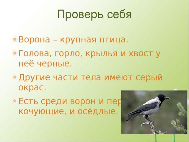 Проверь себя Ворона – крупная птица. Голова, горло, крылья и хвост у неё черн...