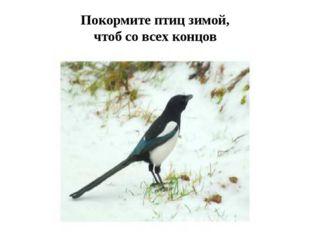 Покормите птиц зимой, чтоб со всех концов