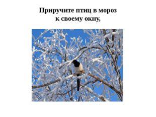 Приручите птиц в мороз к своему окну,