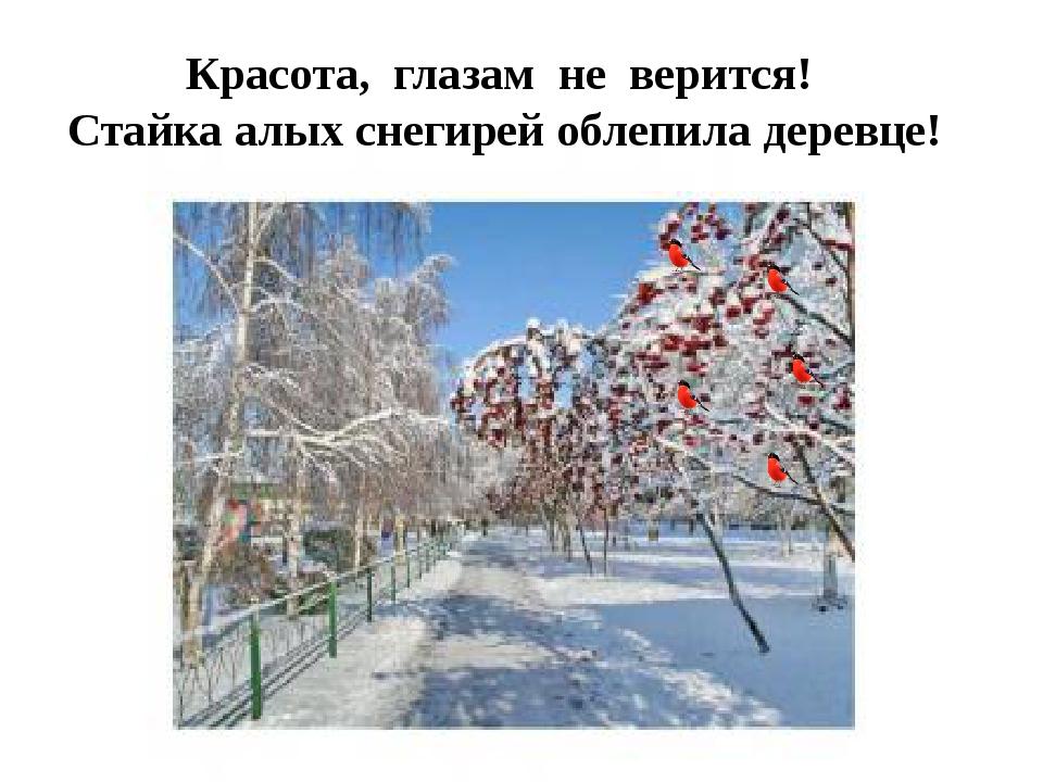Красота, глазам не верится! Стайка алых снегирей облепила деревце!