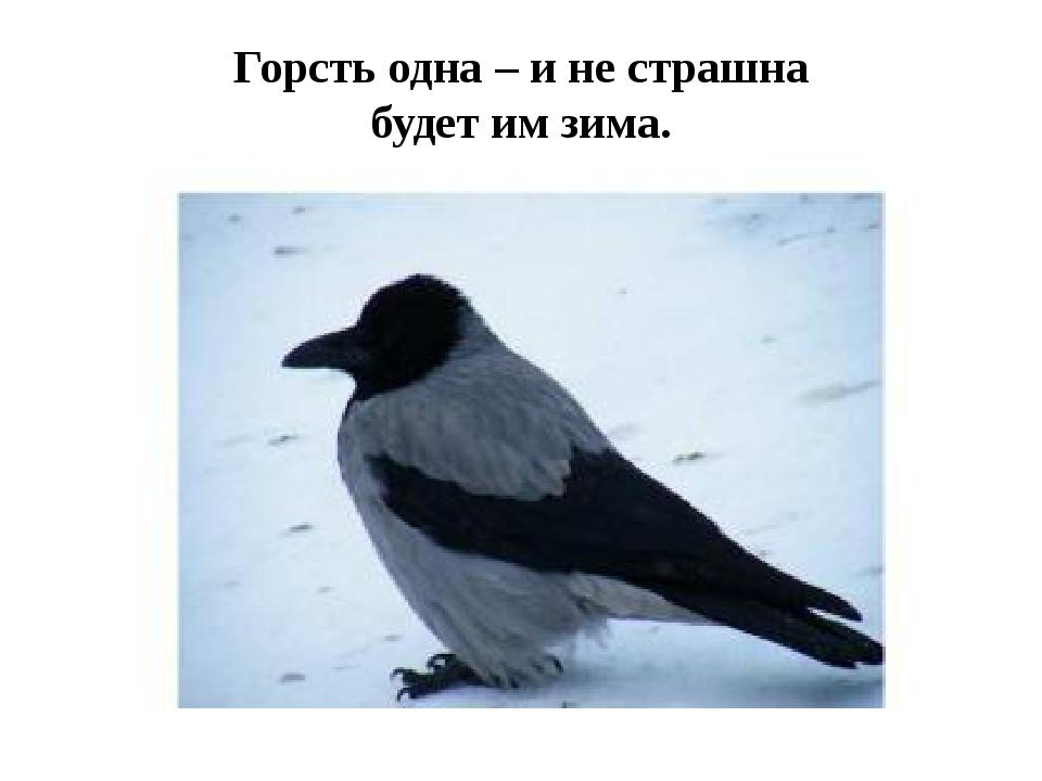 Горсть одна – и не страшна будет им зима.