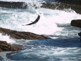 Достопримечательности Тситсикамма — первый морской национальный парк в Африке