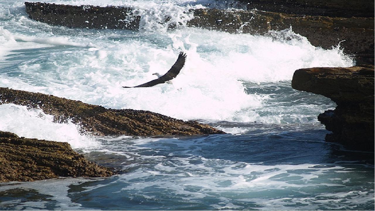 Достопримечательности Тситсикамма — первый морской национальный парк в Африке...